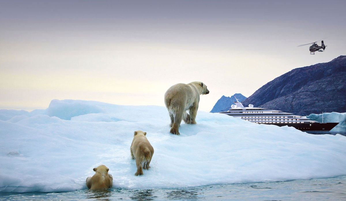 polar bears on ice
